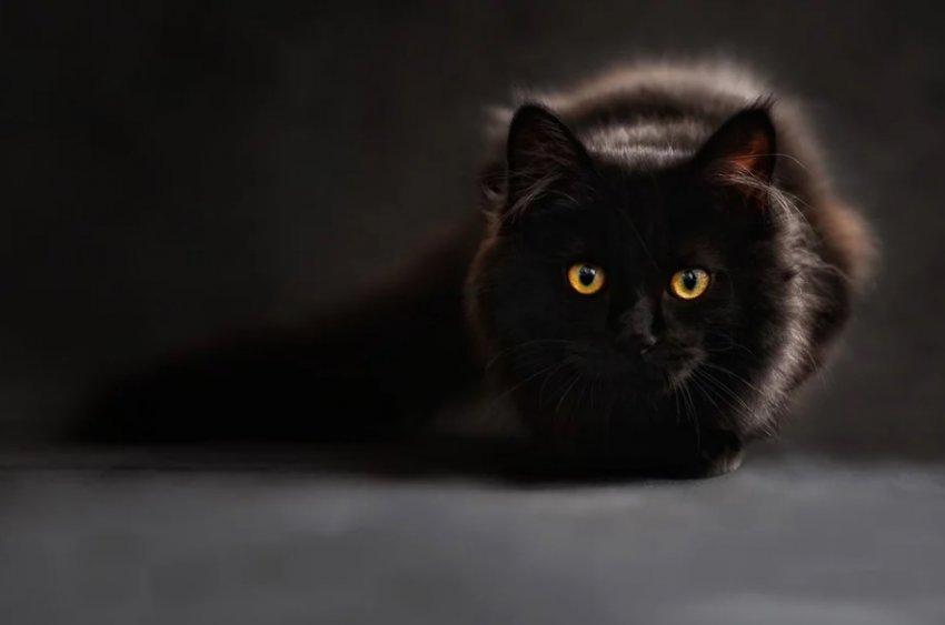 Черные кошки - к празднику