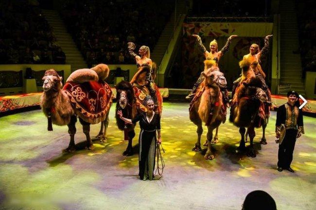 На премьеру цирка можно сходить бесплатно?