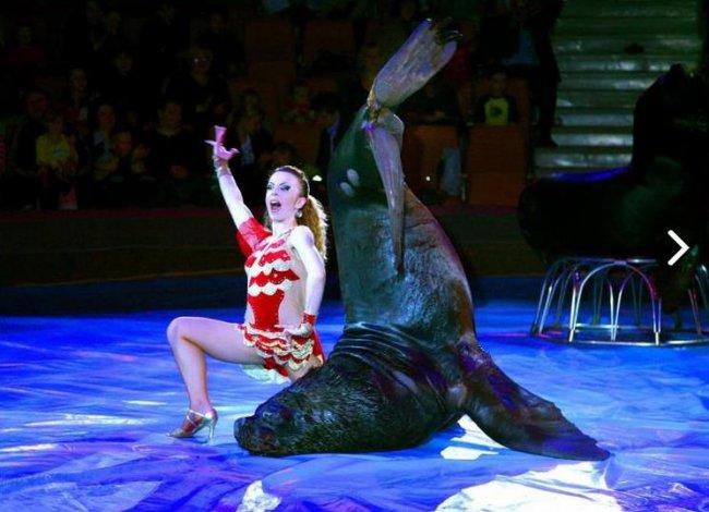 Поцелуй морского льва на манеже цирка
