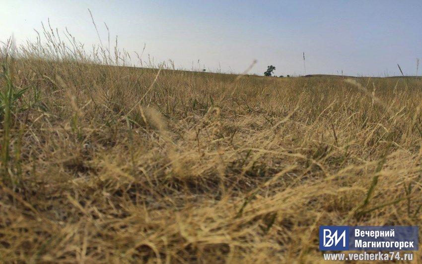 Засуха убивает урожай