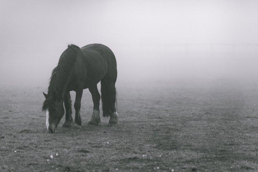 Жертвой стала лошадь