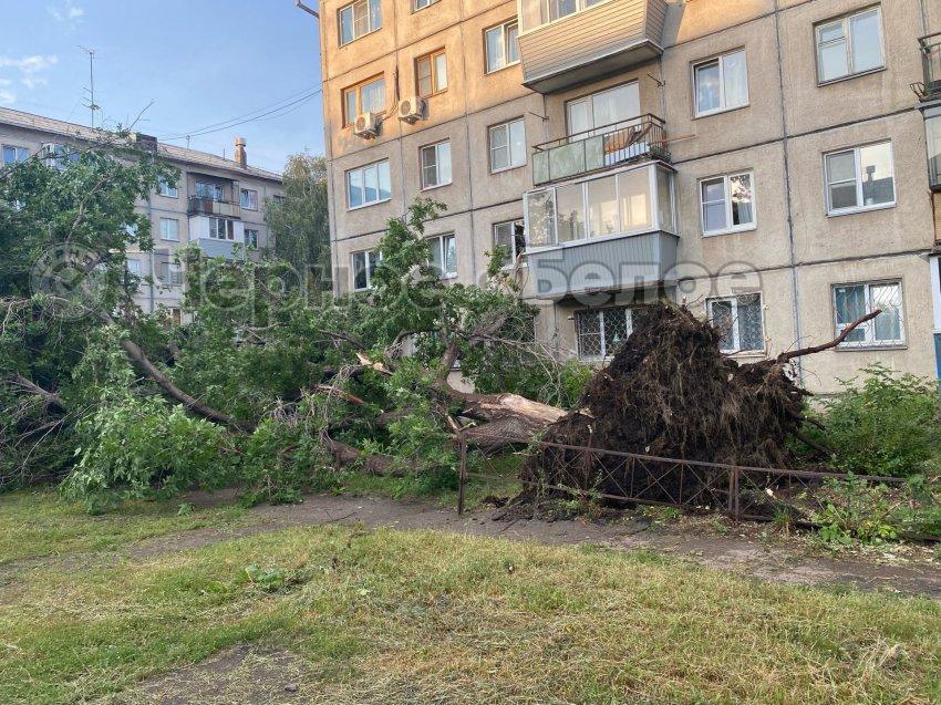 В Магнитогорске повалило дерево