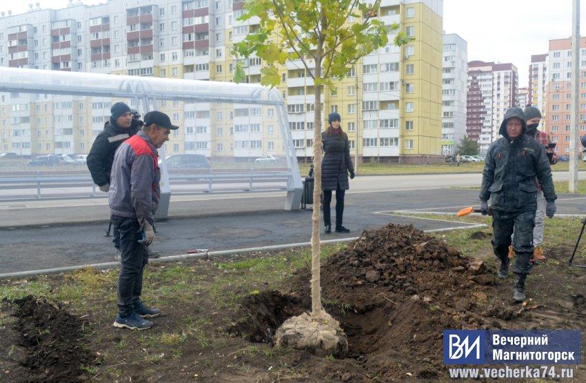 В южной части города высадят сотни деревьев
