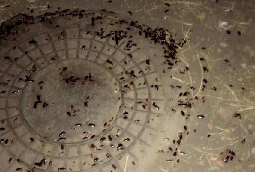 Тараканы атакуют!